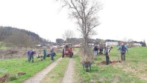 Obstbaumallee wird eingeweiht