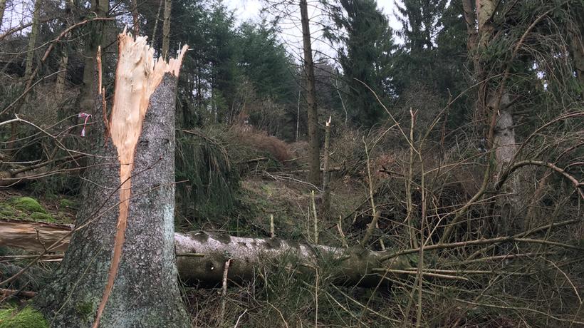 Sturmtief Burglind raeumt mehr als 100 Baeume ab